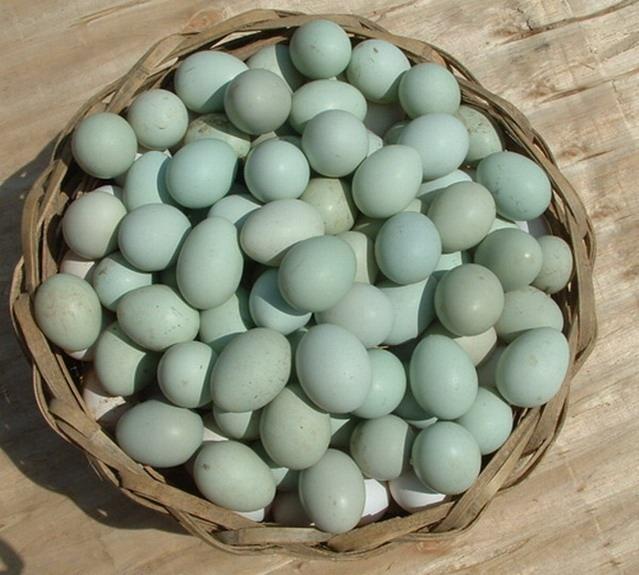 柴鸡蛋_有山家园的神奇绿壳柴鸡蛋